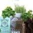 gift box green huerto organico