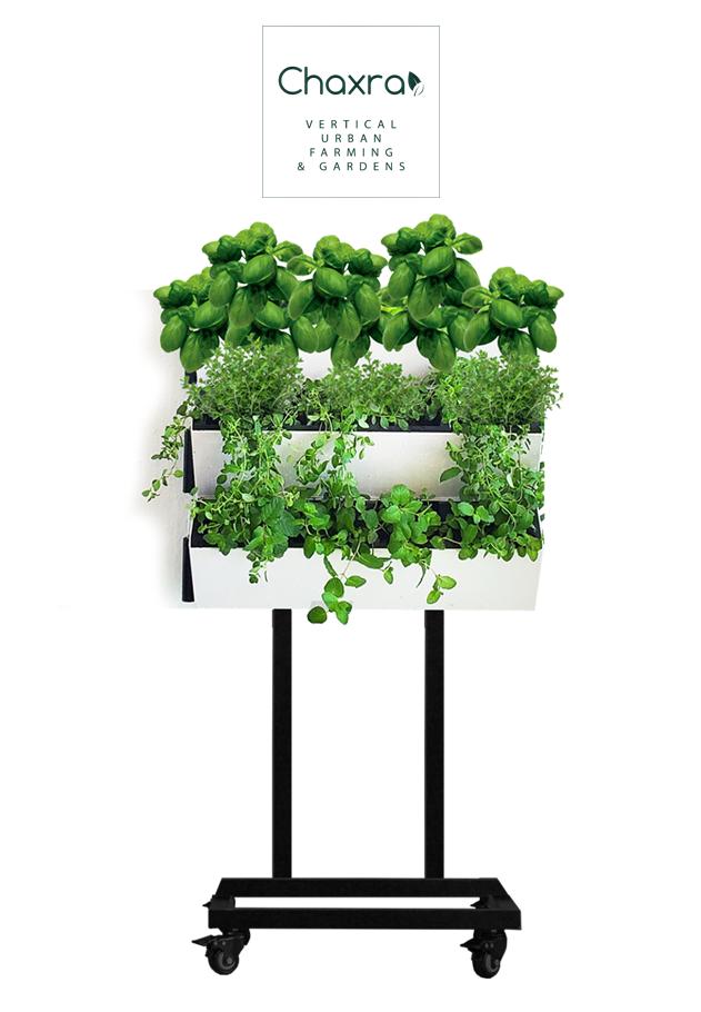 green wall vertical garden jardín cultivo
