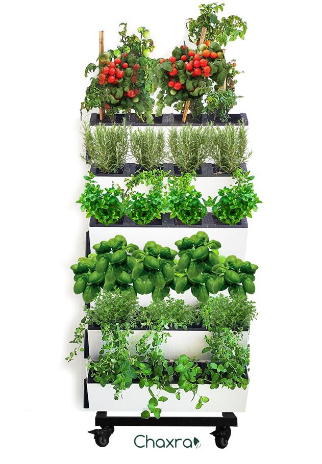green wall vertical garden jardin cultivo